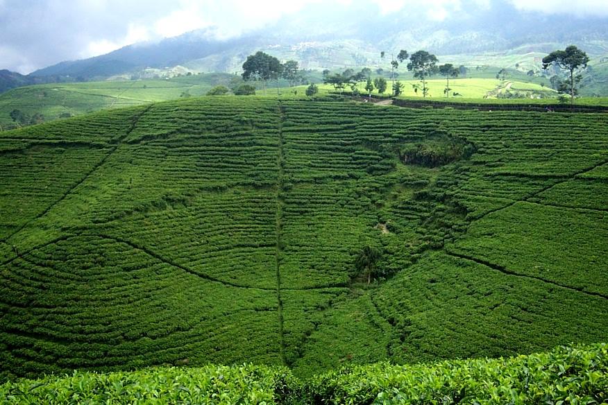 Pengembangan Pertanian Pedesaan Melalui Agrowisata Keluarga